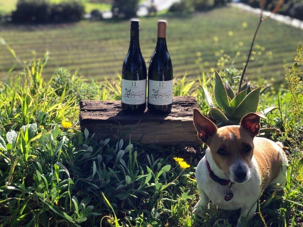 Südafrikanische Weine und Olivenöl - Die kleine Sarah – Saartjie und die Hillcrest Weine