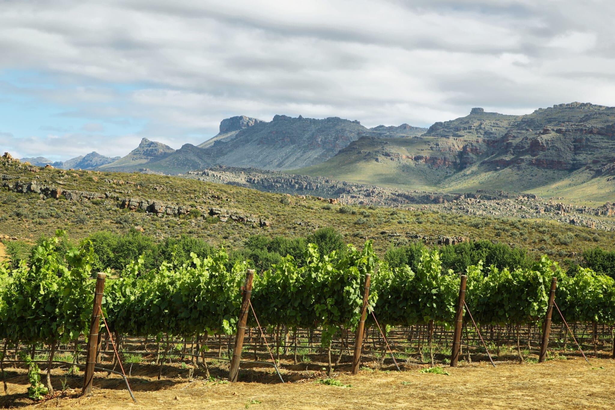 Vineyards in Cederberg nature reserve, South Africa